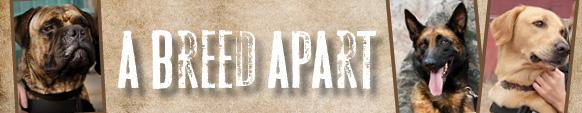 Banner2_BreedApart